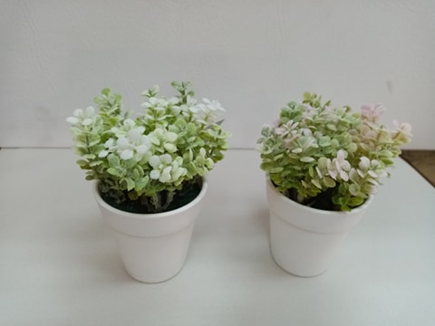 Planta Decortiva